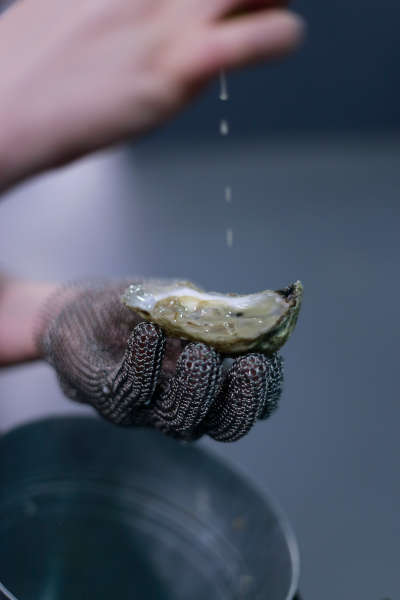 Man holding oyster while pouring lemon on Oyster