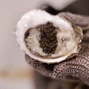 Caviar on freshly shucked oyster