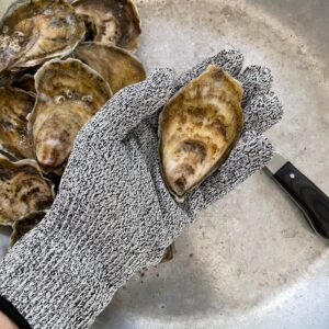 Basic oyster shucking glove with oyster