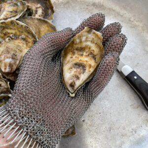 Professional oyster shucking glove with oyster